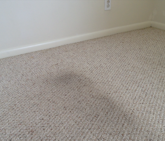 Melbourne Carpet Cleaning from Water Damage Before