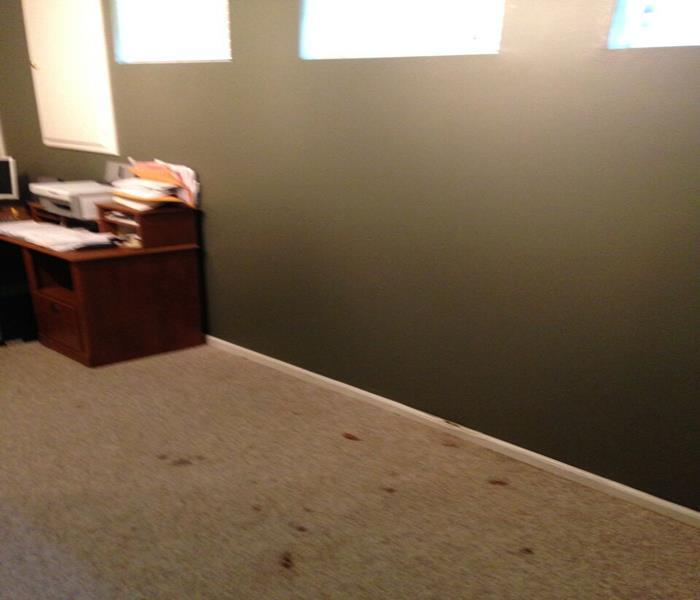 Mold Damage – Viera Office After