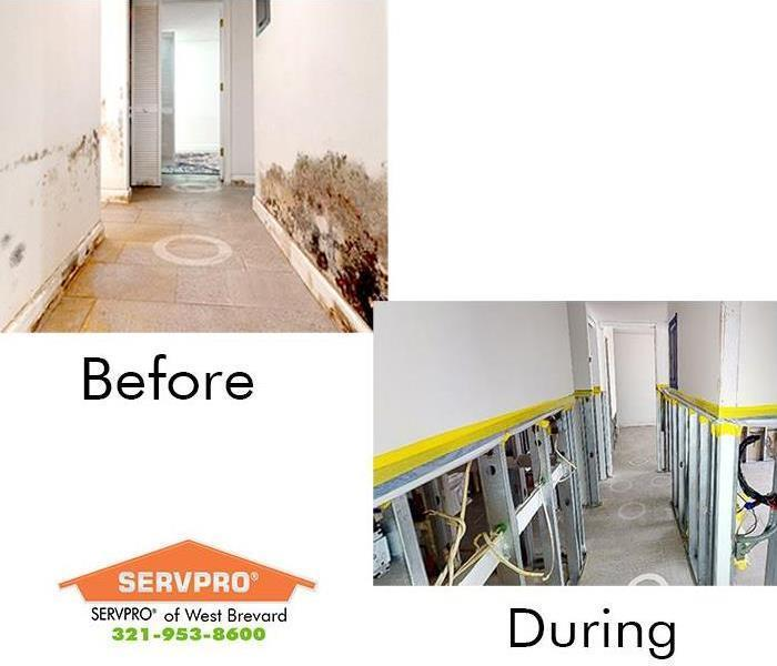 before and during mold remediation