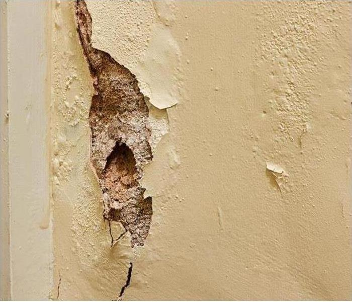 Wall with mold damage