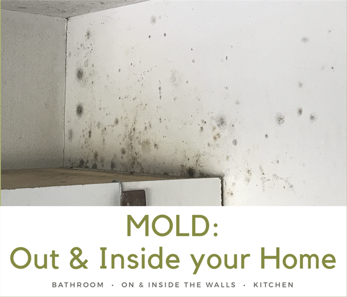 Mold Remediation Mold: Inside & Outside a House