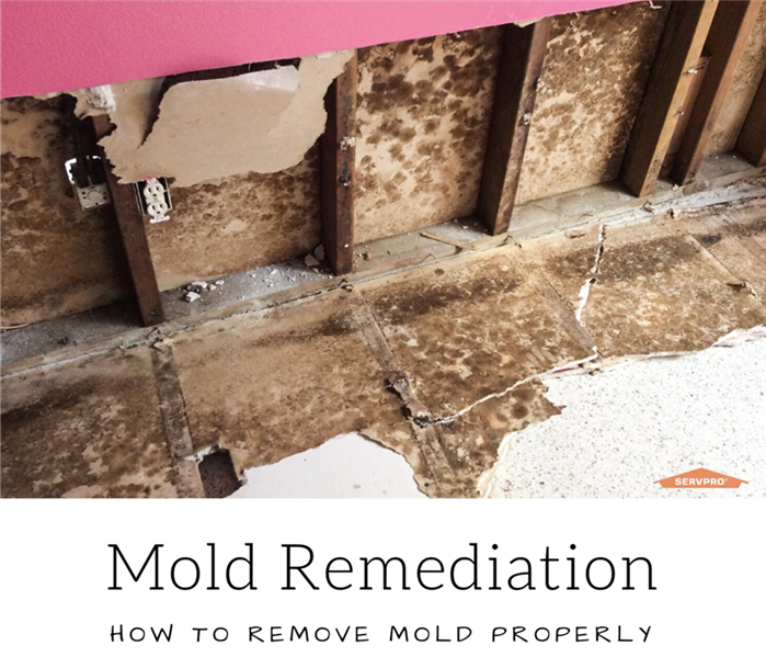 Mold Remediation Mold Mitigation and Remediation Process